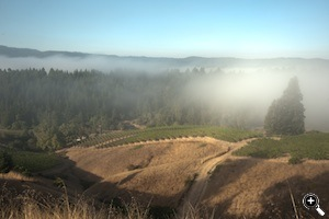 The fog rolling in at the Bearwallow Vineyard.