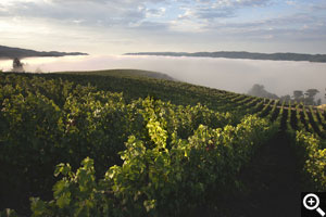Sunrise over the upper pinot blocks frequently finds the valley below filled with fog and Horseshoe sitting just above it.
