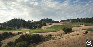 A view of the Horseshoe from the east shows Chardonnay in the two leftmost blocks, Syrah in the center foreground, then the hillside, east facing and upper pinot blocks above and right.
