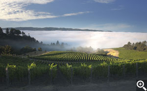 A morning view down the hillside Pinot blocks and over the 'cheeseblock' lower Syrah and the Chardonnay blocks.