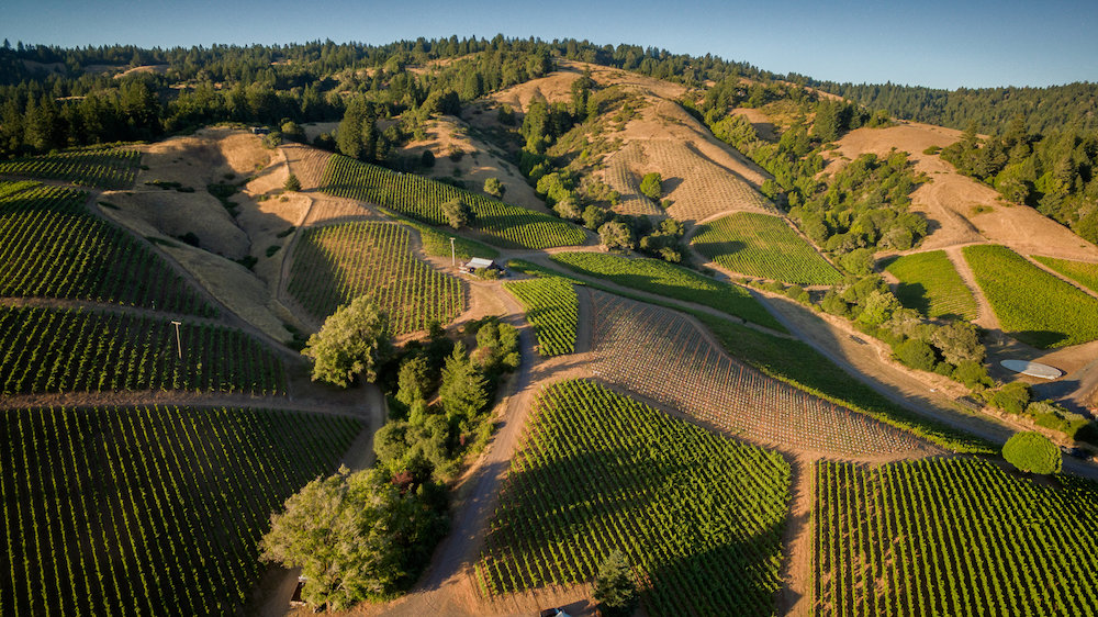 Bearwallow Vineyard Overview